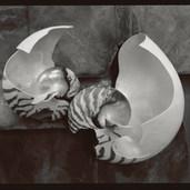 Broken Nautiluses, 1981.jpg