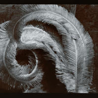 Vicksburg Feather 1976.jpg