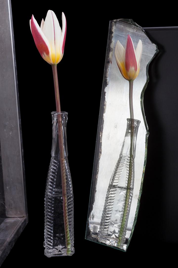 Early Tulip.jpg