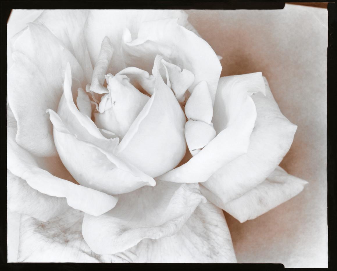 Rose 1976.jpg