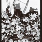 At Edge of Garden, 1986.jpg