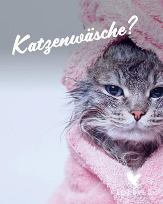 Katzenwaesche - zum Magazin