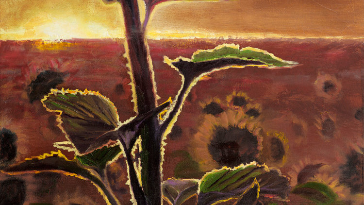 Sunflowers in Light by Jill Lawson