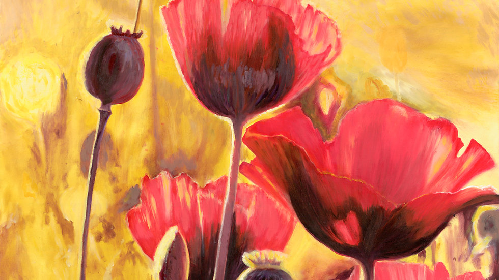 Poppies in Light by Jill Lawson