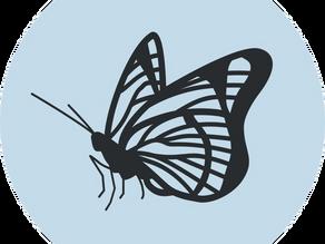 De nachtvlinder vliegt uit – het ontstaan van La Polilla.
