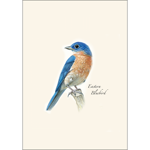 Eastern Bluebird Boxed Note Cards 8-pack