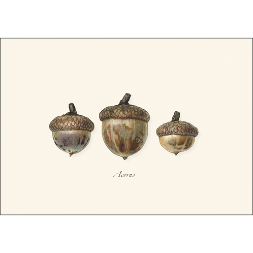 Acorns Boxed Note Cards 8-pack