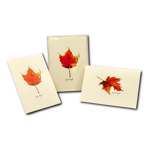 Maple Boxed Note Cards (4 of Each Type) 8-pack
