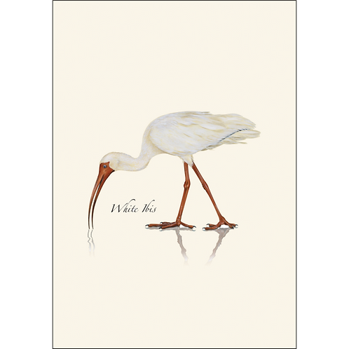 White Ibis Boxed Note Cards 8-pack