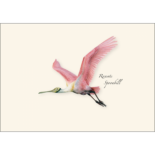 Roseate Spoonbill Boxed Note Cards 8-pack