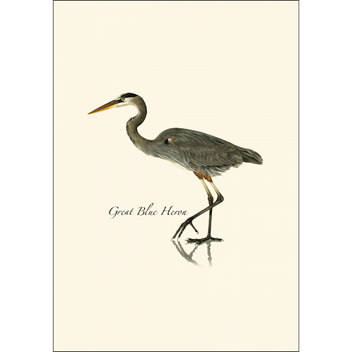 Great Blue Heron Boxed Note Cards 8-pack