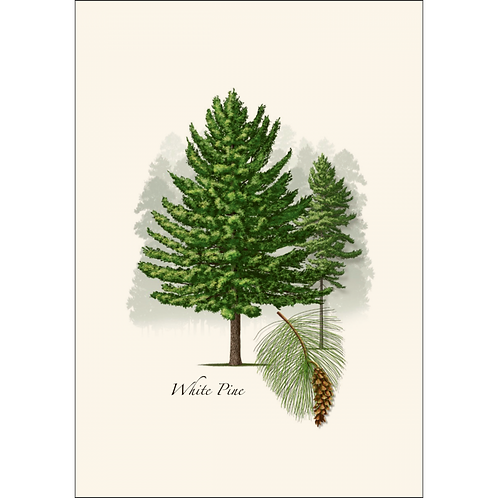White Pine Boxed Note Cards 8-pack