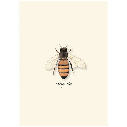 Honey Bee Boxed Note Cards 8-pack