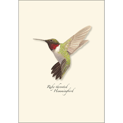 Ruby Throated Hummingbird Boxed Note Cards 8-pack