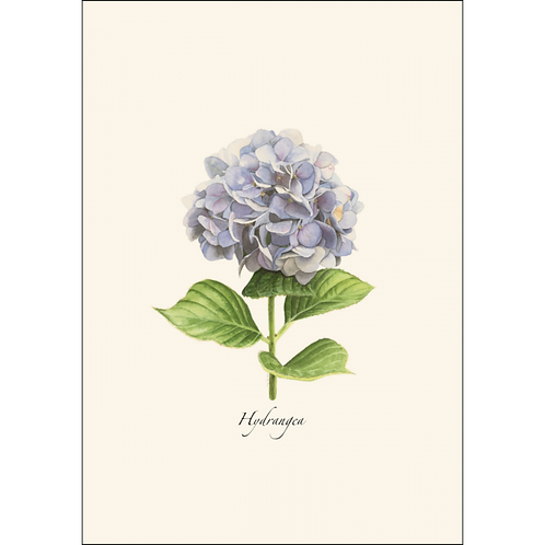 Hydrangea Boxed Note Cards 8-pack