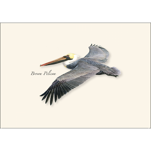 Brown Pelican Boxed Note Cards 8-pack