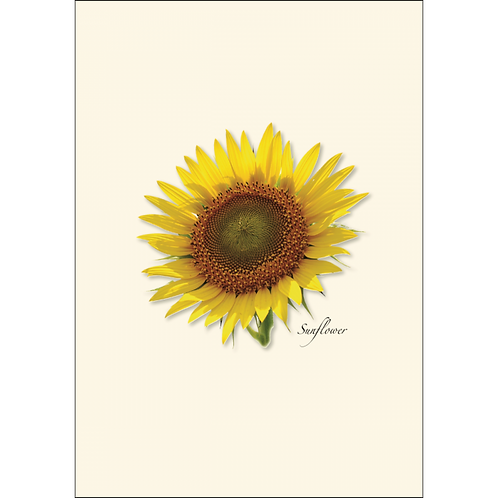 Sunflower Boxed Note Cards 8-pack