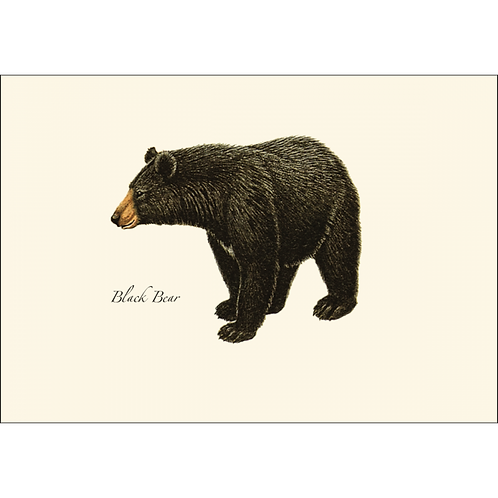 Black Bear Boxed Note Cards 8-pack