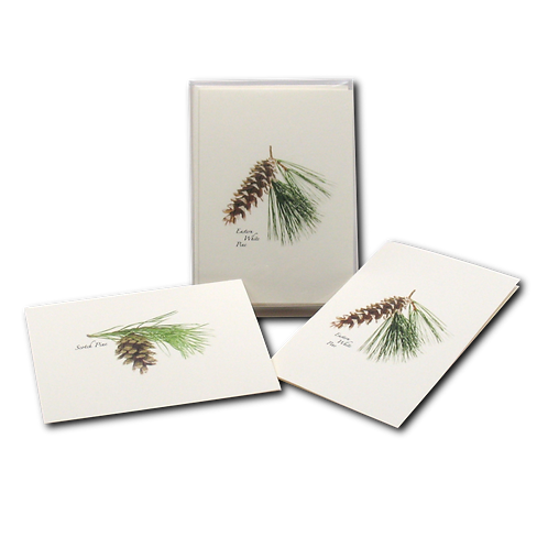 Pinecone Assortment Boxed Note Cards (4 of Each Type) 8-pack