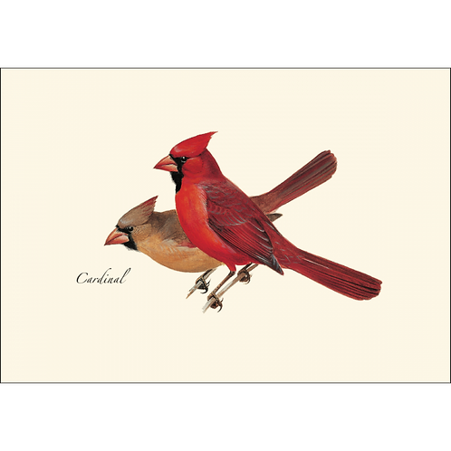 Cardinal Boxed Note Cards 8-pack