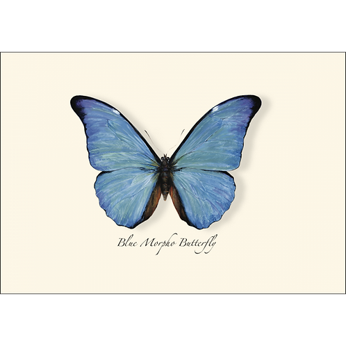 Blue Morpho Boxed Note Cards 8-pack