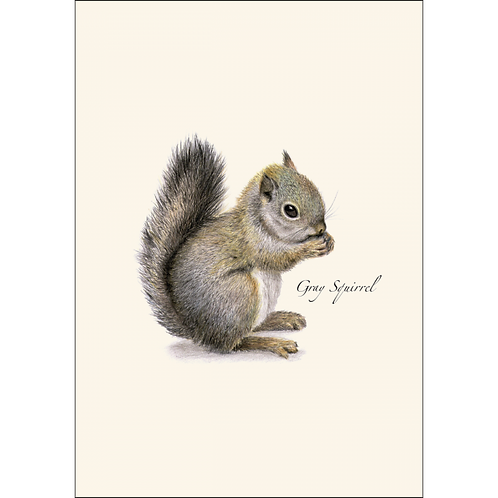 Grey Squirrel Boxed Note Cards 8-pack