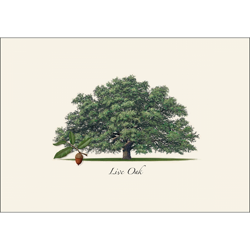 Live Oak Boxed Note Cards 8-pack