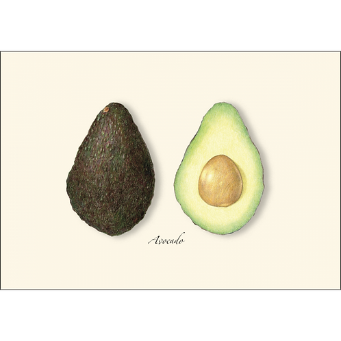 Avocado Boxed Note Cards 8-pack