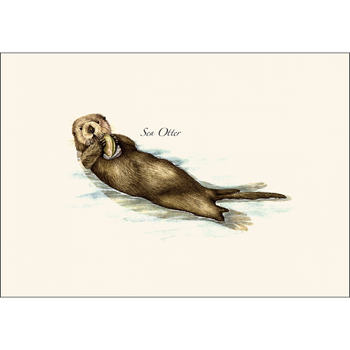 Sea Otter Boxed Note Cards 8-pack