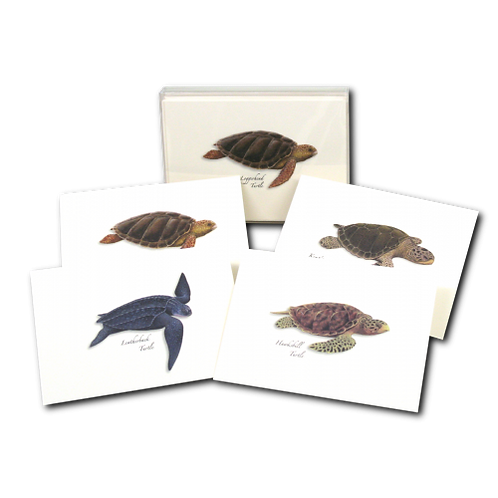 Sea Turtle Boxed Note Cards (2 of Each Type) 8-pack