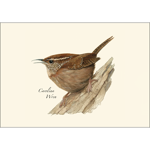 Carolina Wren Boxed Note Cards 8-pack