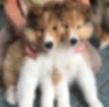 puppy crop.jpg
