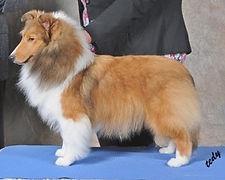GiGi puppy crop.jpg