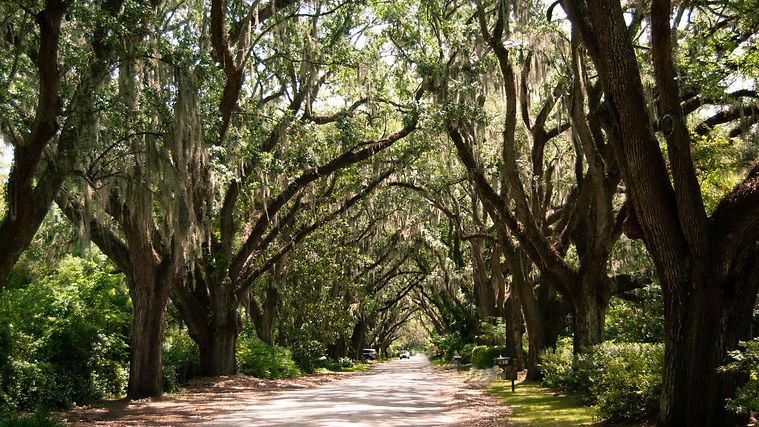 Riverland Terrace Entrance, live oaks, james island, charleston, real estate