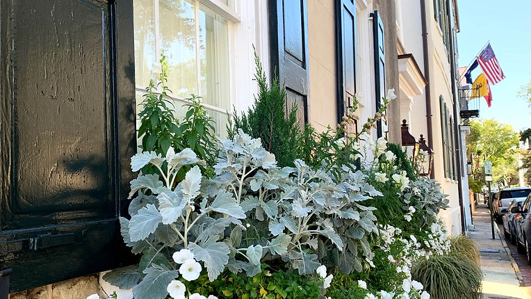 Downtown Charleston Window Boxes James Island Real Estate The Pulse Charleston realtor