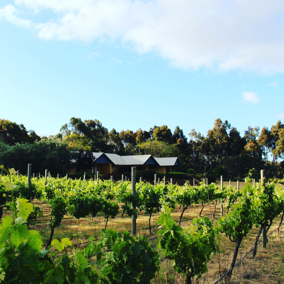 The Summerville Vineyard