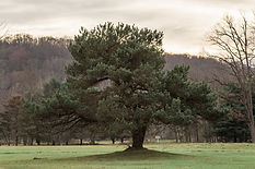 2020_11 Riverwoods004.JPG