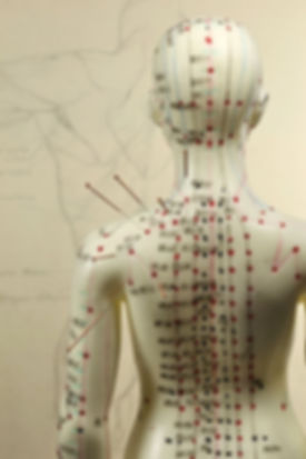 Acupuncture Human Model