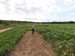 Levantamento de qualidade do solo e quantificação de vegetação.