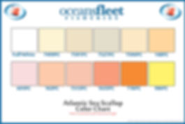 Atlantic Sea Scallop Color Chart