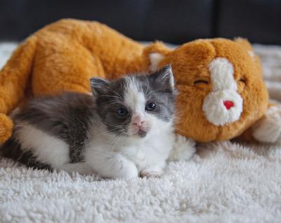 Calmeroos Kitty
