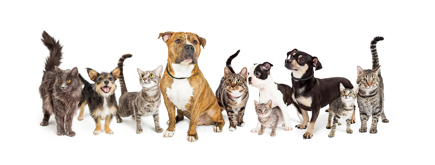 iStock-933909576 dogs and cats together.