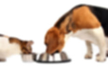 iStock-172168450 dog and cat eating toge
