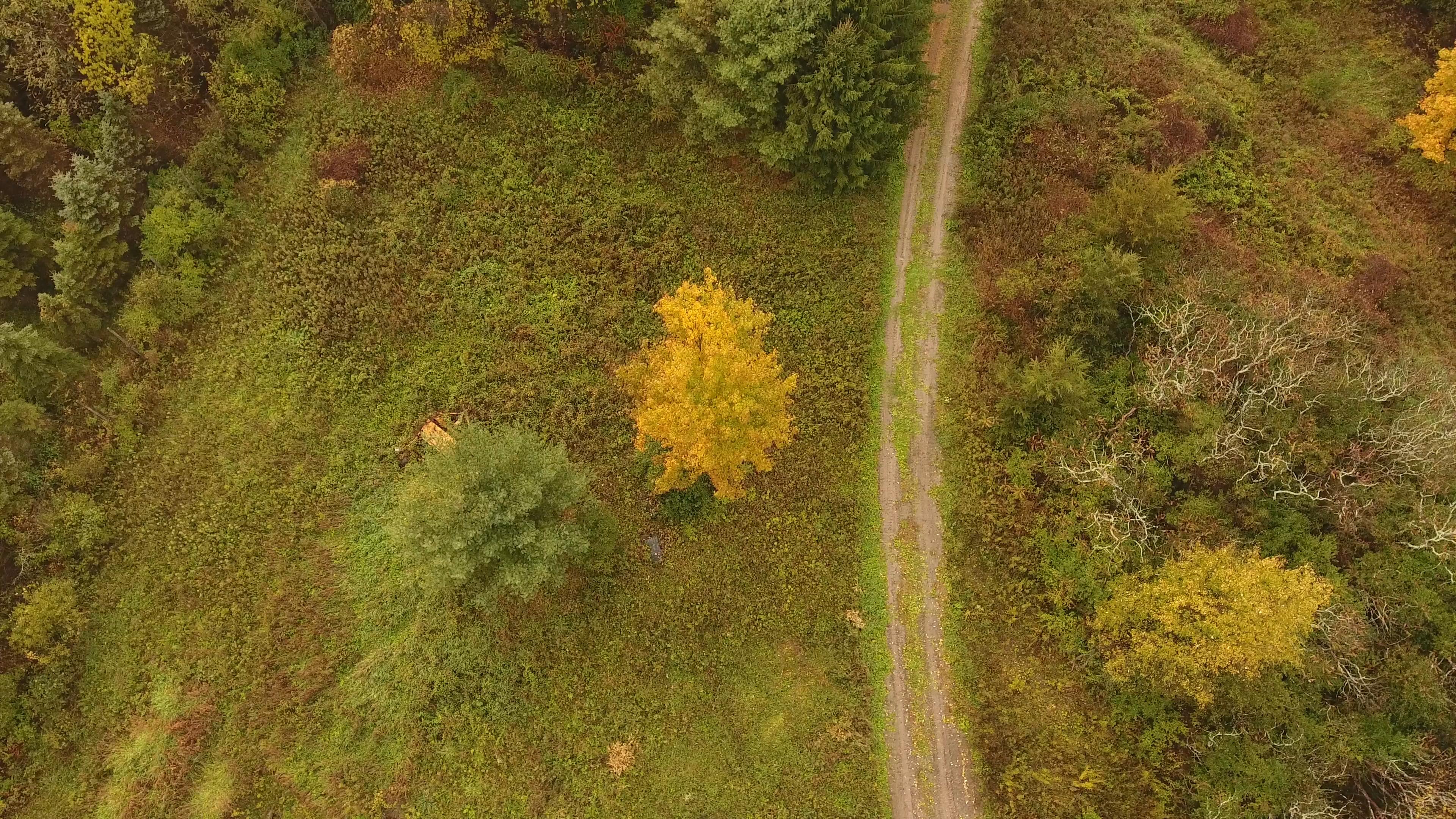 straight down trail fall foliage 10-22-1