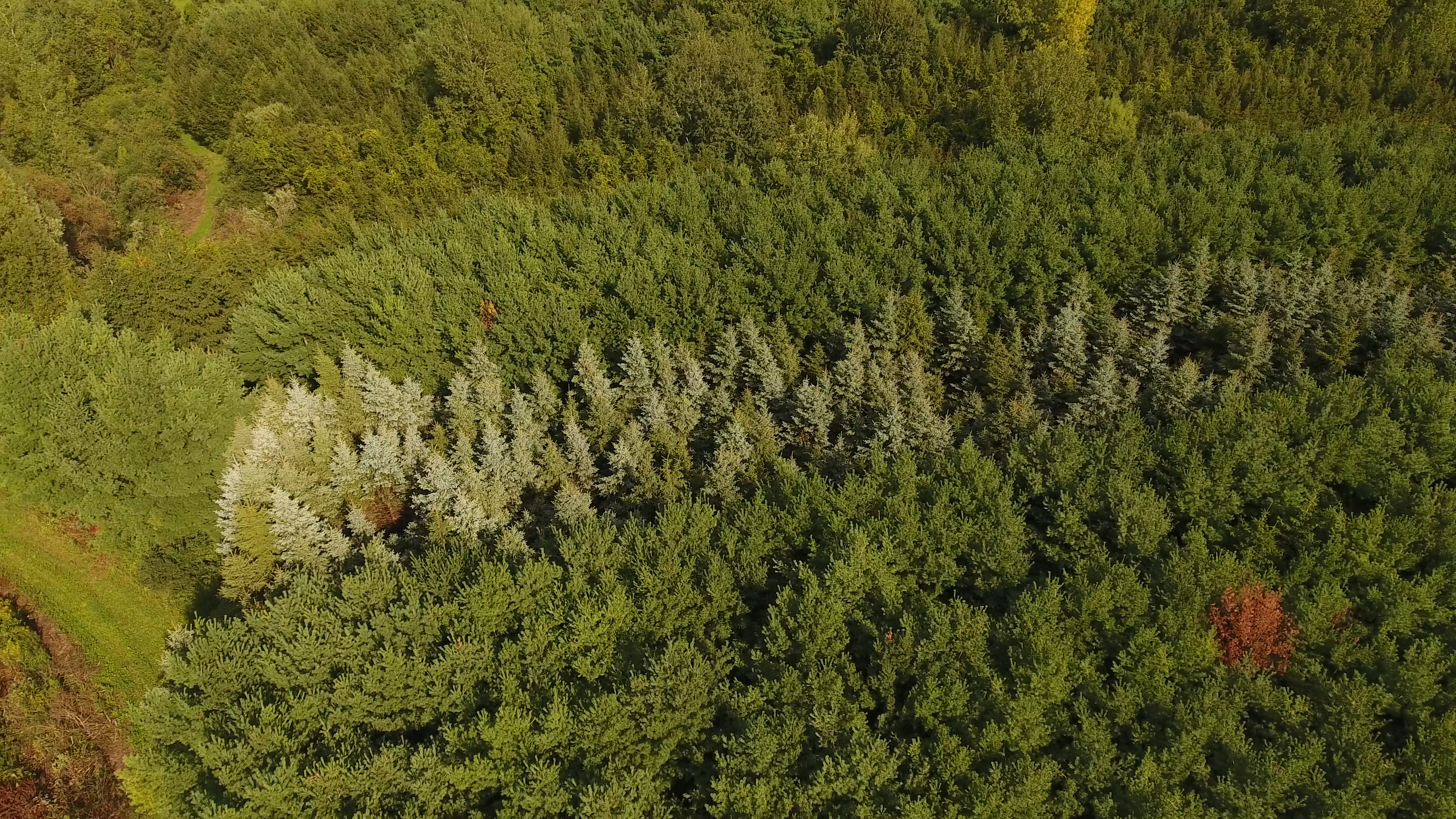 shinrin trees above one dead red 9-6-18.