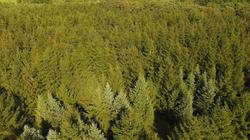farm pines overheard 9-6-18