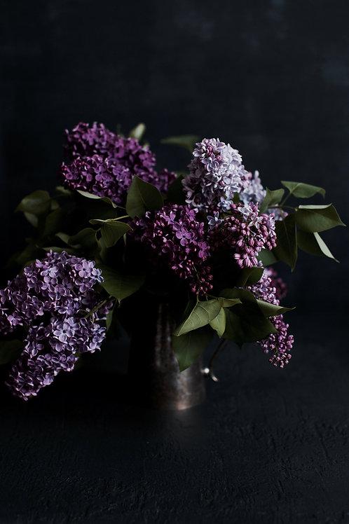 A6 Greeting Card - Chasing Lilacs (i)