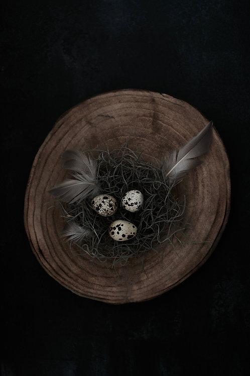 Photographic Print {nest}