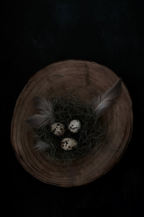 A6 Greeting Card - Nest
