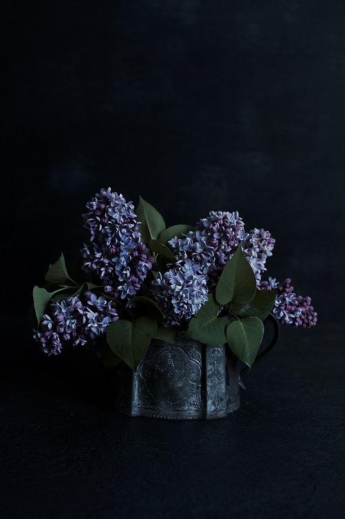 Photographic Print {chasing lilacs (ii)}